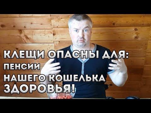 Клещи атакуют Беларусь. Требую бесплатный анализ клеща на энцефалит