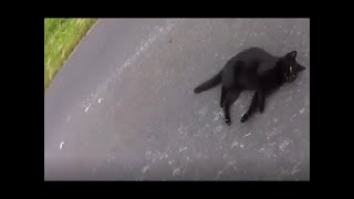 Cat Rescue Compilation (Real Life Heroes) .