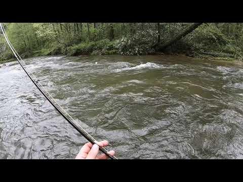 Duke's Creek Fly Fishing(2019)