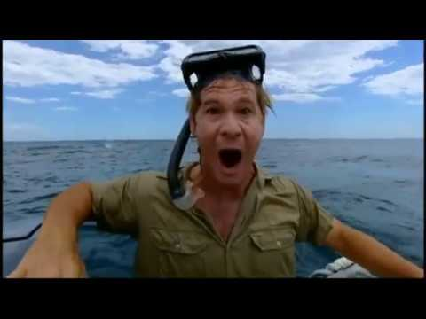 Steve Irwin swims with a gigantic whale shark!