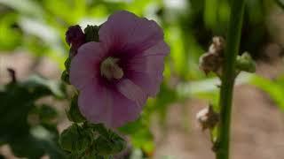 Oklahoma Gardening Viewers Garden Contest