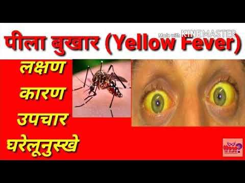 Yellow fever पीला बुखार   Flavi Virus   Pila Bukhar   पीतज्वर   yellow fever treatment in hindi