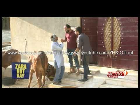 Zara Hut Kay Cow Ki Khal New HD Funny ZHK 2016 Bakra Eid Special 480p