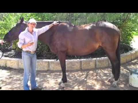 Saddlefit and the asymmetric horse
