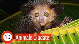 Top 10 Animale Ciudate