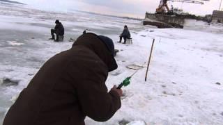 Зимняя рыбалка крупный елец, а также крупный сохатый или лось