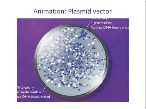 Recombinant DNA and Biotechnology CMM 12 8 14
