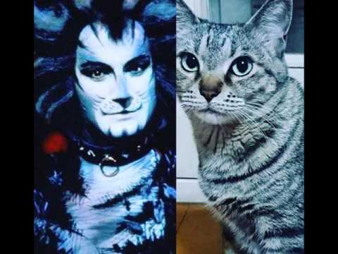 Cats - Overture(UK)