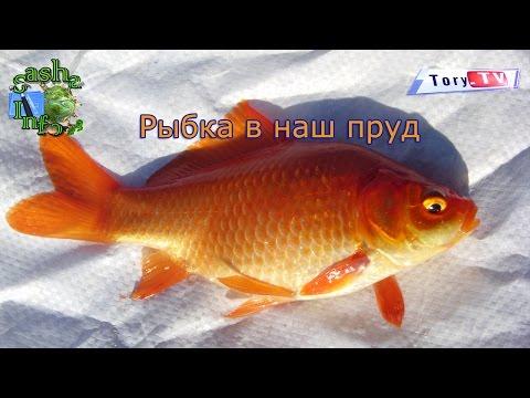 оранжевый карп рыбалка