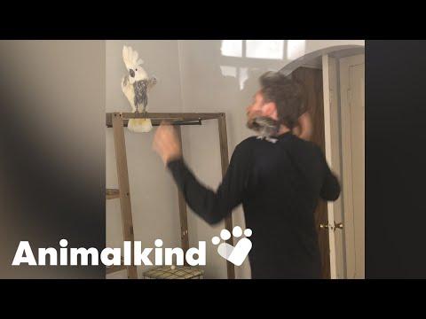 Sad cockatoo learns to shake her tail feathers   Animalkind
