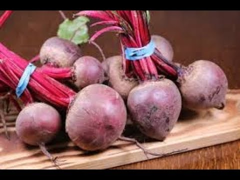 Modern Ways of Beetroot Farming in Kannada
