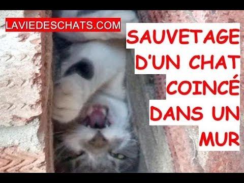 Le Sauvetage D'un Chat 🐱 Coincé Dans Un Mur