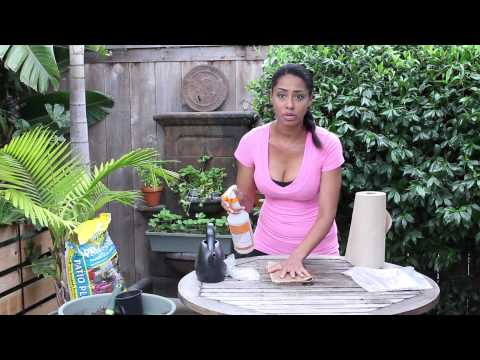 Germination of Bean Seeds Without Soil : Garden Seed Starting