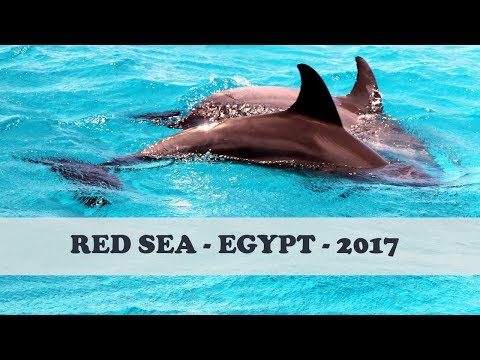 TRIP to EGYPT 2017🌊 RED SEA TRIP🌊 TRAVEL VLOG 🌊 DOLPHINS