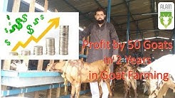 Profit by 50 Goats in 2 Years in Goat Farming