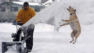 Śmieszne Psy I Koty Bawiące Się W Śniegu - Zabawna Kompilacja Zwierząt