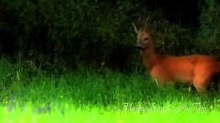 Спаривание Животных - Спаривание Смешно