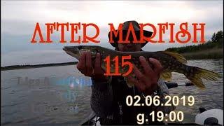 After Marfish # 115 Ptaszniki, szczupaki, lin, karpie,  Liga Marfisha, Live czat - Na żywo