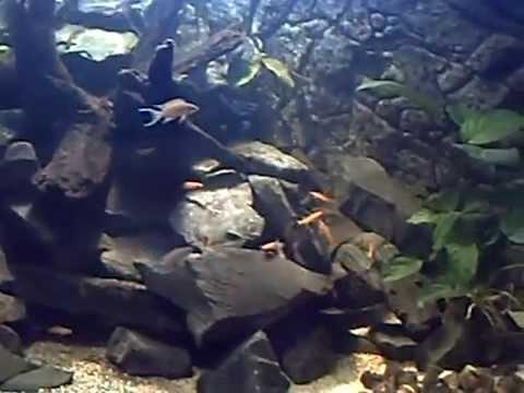 Pompe Aquarium Decor