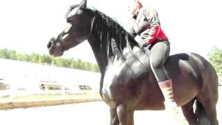 Аврора - умная лошадь. Видео про лошадей.(Фризские лошади - самые умные. Занятия ведутся по авторской методике Юлии Худяковой. http://happy-horses.ru., 2015-05-22T19:17:08.000Z)