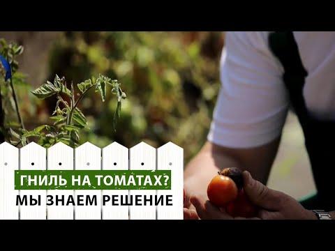 Гниль на помидорах. Как бороться?