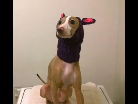 Greyknits Snood For Italian Greyhound Cancer Research For Ludwig