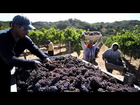 Harvest with Gina Gallo