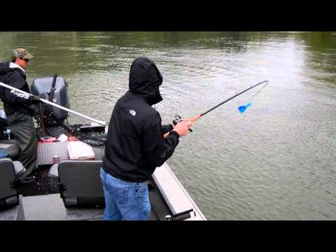 willamette river spring chinook fishing