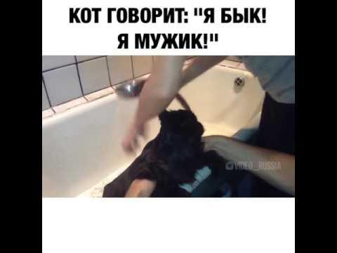 Кот кричит я бык! Я мужик! (Я думал коты не знают русского)