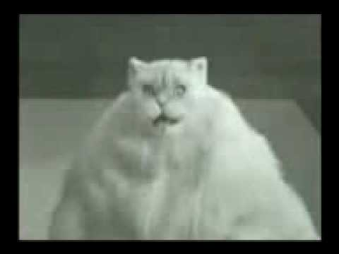 Singing and dancing cats