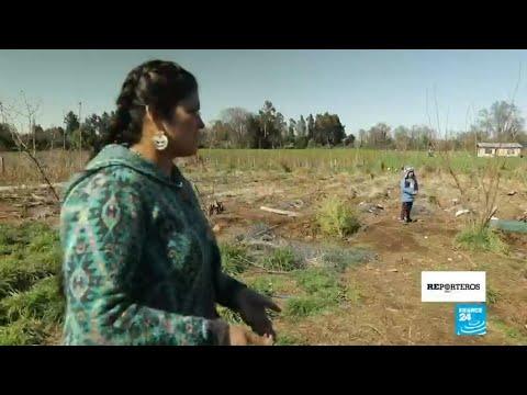 La rebelión de los mapuches, el pueblo chileno que lucha por sus tierras