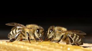 ♫ Sounds of Buzzing Bees ֎ screenshot 4