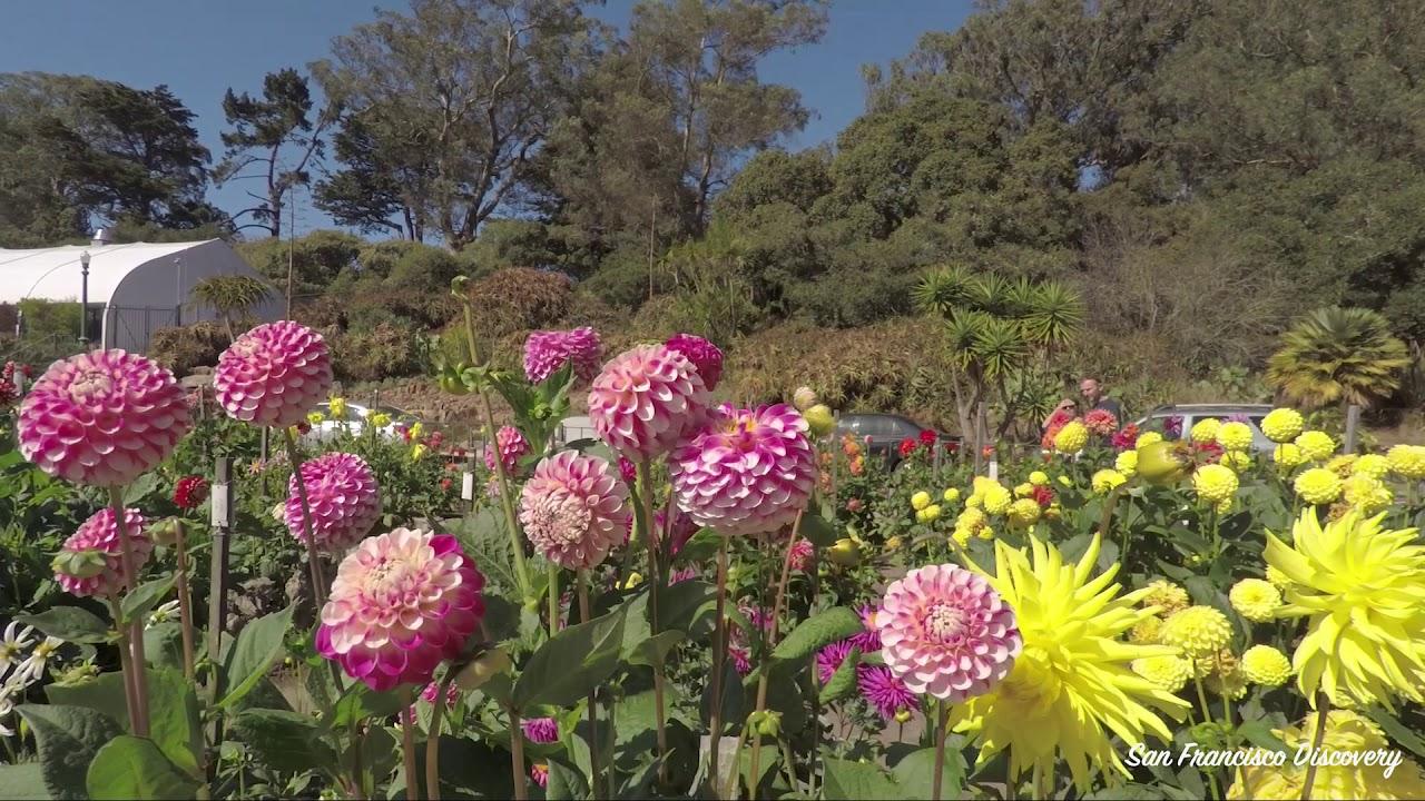 Dahlia Garden, Golden Gate Park - YouTube