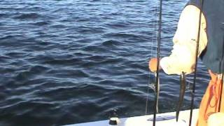 Striped Bass Top Water Cape Cod 2009 Get-Reel Fishing