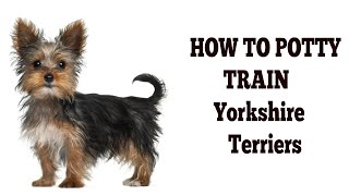 How To Easily House Train Yorkie