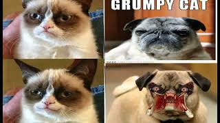 funny cat f funny cat birthday ecards