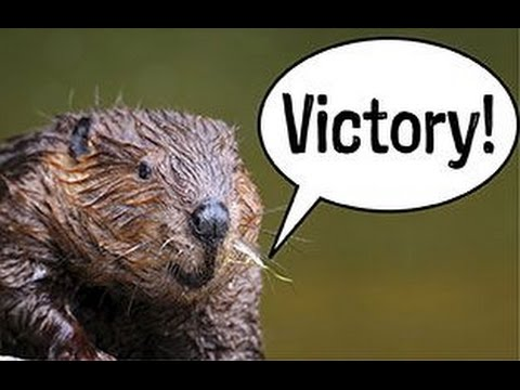 Beavers given chance to stay on River in Devon
