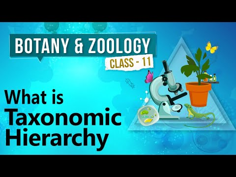 What is Taxonomy Hierarchy?