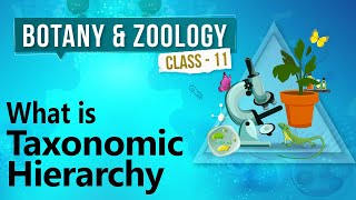 What Is Taxonomic Hierarchy - Diversity in Organisms - Biology Class 11