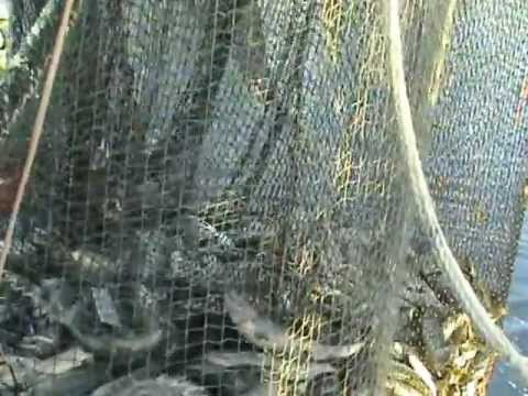 30,000 POUND SALMON SEINING SET F/V ALEUTIAN SPIRIT SUMMER 2012 HIDDEN FALLS