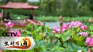 《生财有道》 20190704 夏日经济系列 河南孟津:村村有妙招 全域旅游火| CCTV财经