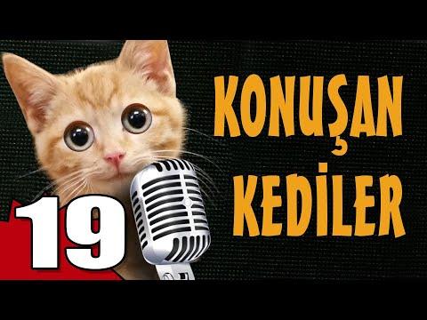 Konuşan Kediler 19 - En Komik Kedi ları