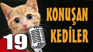 Konuşan Kediler 19 - En Komik Kedi Videoları