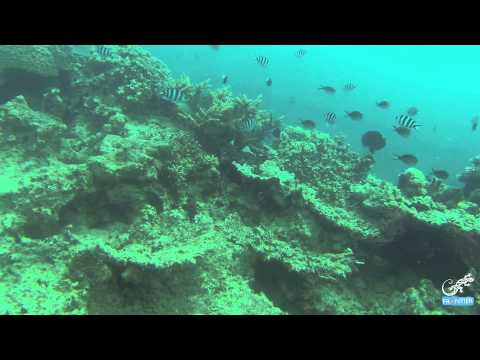 Video blog: Belize Marine Project coordinator