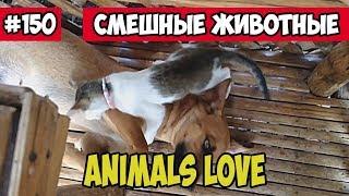 Любовь животных. Смешные животные, подборка 150.