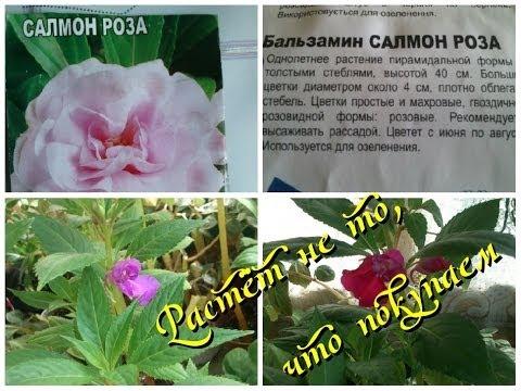 В продаже растения, саженцы, семена во владивостоке!. Цены на товары для сада и огорода.