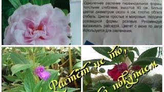Семена комнатных растений и то, что из них выросло(Очередное видео о комнатных растениях из серии