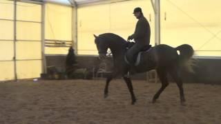 Конный спорт обучение. Тренировка молодой лошади. Выездка. Кизимов М.И.