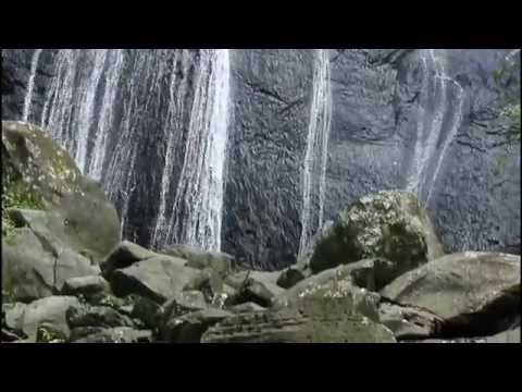 Puerto Rico Tours and Activities Rainforest tours