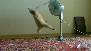 Кот и вентилятор